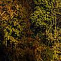 Fall Color Trees V7 Pano by John Straton