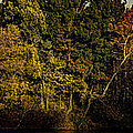 Fall Color Trees V8 Pano by John Straton