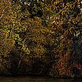 Fall Color Trees V9 Pano by John Straton