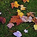 Fall Colored Leaves by Lisa  Telquist