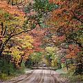 Fall Colors - 2 by Victoria Feazell