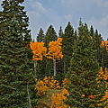 Fall Colors 2 Greeting Card by Ernie Echols