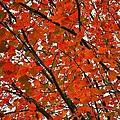 Fall Colors 2014-10 by Srinivasan Venkatarajan