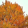 Fall Colors 2014-11 by Srinivasan Venkatarajan