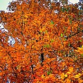 Fall Colors 2014 - 14 by Srinivasan Venkatarajan