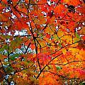 Fall Colors 2014-4 by Srinivasan Venkatarajan