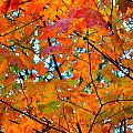 Fall Colors 2014-5 by Srinivasan Venkatarajan