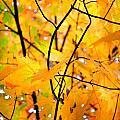 Fall Colors 2014-7 by Srinivasan Venkatarajan