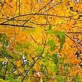 Fall Colors 2014-8 by Srinivasan Venkatarajan