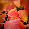 Fall Colors 6675 by Timothy Bischoff