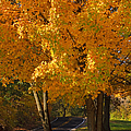 Fall Colors by Adam Romanowicz
