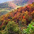 Fall Colors Along The Blueridge by Duane McCullough