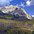 Fall Colors At Gunnison National Forest by Tim Fitzharris