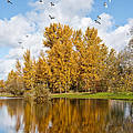 Fall Colors Clouds And Western Gulls Reflected In A Pond by Jeff Goulden