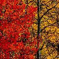 Fall Colors Dp by Ernie Echols