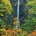 Fall Colors Frame Multnomah Falls Columbia River Gorge Oregon by Dave Welling