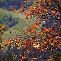 Fall Colors by Gloria Pasko