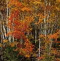 Fall Colors Greeting Card by Ernie Echols