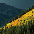 Fall Colors In Aspen Colorado by Brandon Huttenlocher