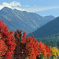 Fall Colors In Joseph Or by Ed  Cooper Photography