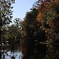 Fall Colors In The Swamp by Christiane Schulze Art And Photography