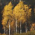 Fall Colors In Washington Cascades by Paddrick Mackin