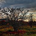 Fall Colors by Jennifer Wheatley Wolf