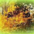 Fall Colors by John Potts