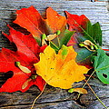Fall Colors by Karl Monkemeyer