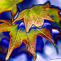Fall Colors by Maureen Cunningham