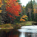 Fall Colors On A Lake by Robert  Suggs