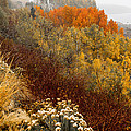 Fall Colors On June Lake Loop by Webb Canepa