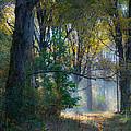 Fall Colors by Paul Treseler