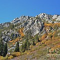 Fall Colors S Lake Tahoe California by Julie Doerges