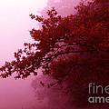 Fall Colors by Tatjana Senz