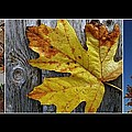 Fall Colors Triptych by Patricia Strand
