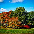 Fall Colours In Massachusetts by Charlene Gauld