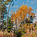 Fall Colours by Mike Santis
