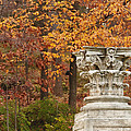 Fall Column by Terry Rowe