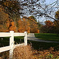 Fall Comes To The Hollow by Kay Novy