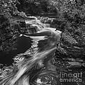Fall Creek Flow II by Michele Steffey
