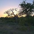 Cedar Park Texas Fall Creek Sunset by JG Thompson