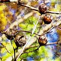 Fall Crepe Myrtle by Melissa Bittinger