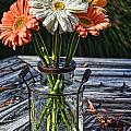 Fall Daisy Cheer by Susan Smith