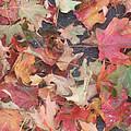 Fall by Desi Butler