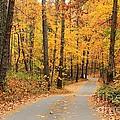 Fall Drive by Geraldine DeBoer