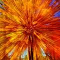 Fall Fast Forward by Daniel Thompson
