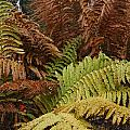 Fall Ferns Acadia National Park Img 6355 by Greg Kluempers