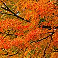 Fall Fiesta by Rachel Cohen