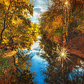 Fall Filtered Reflections by Sylvia J Zarco